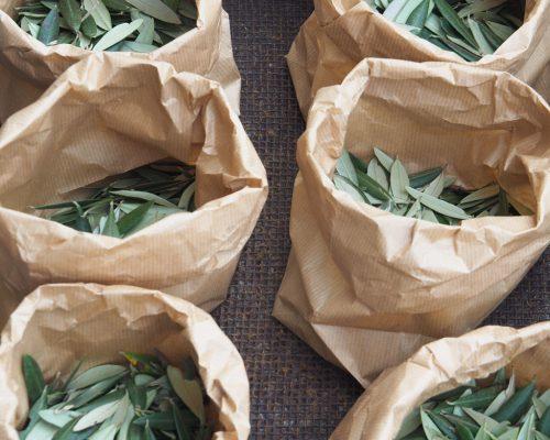 Mariage-menthe-et-vegetal-petales-olivier-sortie-eglise-studio-aloki
